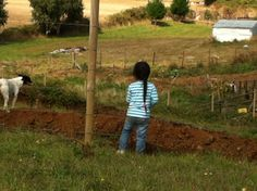 Mirando la granja
