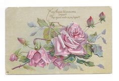 Antique Embossed Postcard Pink Roses Blossoms Impart the Good Wish in My Heart