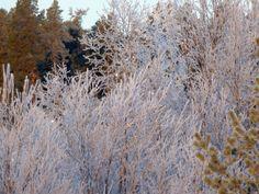 Helmikuisen pakkasaamun säihkettä pohjoisimmassa Lapissa. #talvi #Lappi #winter #Lapland
