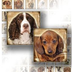 INSTANT DOWNLOAD. Dogs and puppies digital collage scrabble tile necklace jewelry making paper supplies altered art download image file