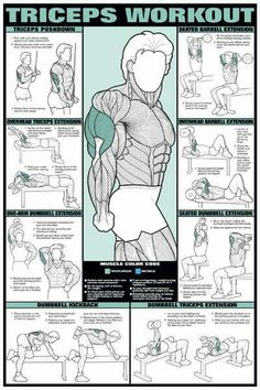 tricep workout                                                                                                                                                      More