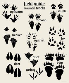 Woodland Animal Tracks Poster   Nursery Wall Art   Alley Kids