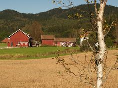 Typical Norwegian farm, just outside Oslo.