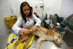 Conheça o primeiro hospital veterinário público do Brasil | Metro Jornal