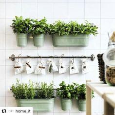 Ter uma horta em casa é um luxo que todos podemos desfrutar!! Espaço não é problema já que muitas plantas podem ser cultivadas em vasos. Basta um lugar ao sol e um pouco de carinho e você terá sempre temperos fresquinhos para incrementar suas receitas. Veja essa idéia postada pelo @home_it ・・・ E quem disse que precisa de espaço pra ter sua horta?! Amei essa ideia para temperos em casa! #horta #cozinha #homedecor #inspiration #homeit #decoracao #cool #green #designdeinterior - conteúdo de...