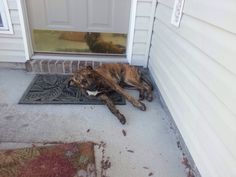 #Founddog #Oceanway #FL New Berlin & Airport Brown Brindle male JENNAE TUZZOLO LOST AND FOUND PETS NE FL https://m.facebook.com/photo.php?fbid=10202055482903235&id=1671643114&set=o.128776117212549