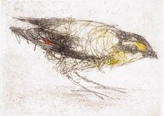 Pardalote - Bridget Farmer Etching Available at www.cascadeprintroom.com.au
