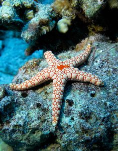 Star fish in the ocean.