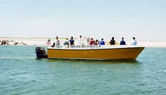 Take a water taxi or ferry to North Monomoy Island or South Beach off the coast of Chatham. Bring your coolers, chairs, beach toys, and fishing poles. Info. on boat tours and cruises.