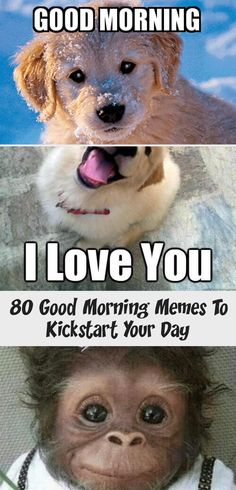 80 Good Morning Memes To Kickstart Your Day In 2020 Morning