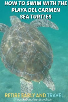 HOW TO SWIM WITH PLAYA DEL CARMEN SEA TURTLES - https://www.retireearlyandtravel.com/playa-del-carmen-sea-turtles/