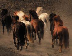 Image from http://files.dvm360.com/alfresco_images/DVM360/2013/10/25/19e97f10-1192-4f66-85a7-f5d5f1cc05e8/wild_horses_web.jpg.
