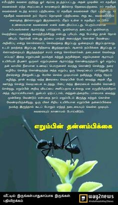 Moral Stories, Short Stories, Tamil Stories, Tamil Love Quotes, Tamil Language, Good Morning Messages, Morals, Good Morning Wishes, Morality