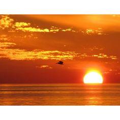 Sunset & Pelican, Barbara Rosenzweig, Etsy, Photograph Art, Beach... ❤ liked on Polyvore