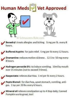 I have used some of these these multiple times on my dog. Saves a lot of money not running to the vet every time! I would like to add allergy eye drops to the list too for the crusties!