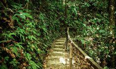 Hiking Tours, Suspension Bridge, Tree Tops, Travel Activities, Travel Deals, Walking Tour, Garden Bridge, Southeast Asia, Bridges
