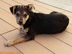 Perros encontrados  España  Las Palmas - Gran Canaria  Vecindario March 10 2018 at 07:33AM   GRAN CANARIA  #PERDIDO #ENCONTRADO  Contacto y Info: https://leales.org/perdidos-o-encontrados/perros-encontrados_1/gran-canaria_i3701 #Difunde en #LealesOrg un #adopta y sé #acogida para #AdoptaNoCompres O un #SeBusca de #perro o #gatos ℹ Buenos días. Acaba de entrar este perrito x mi casa. En Pozo Izquierdo. Estará perdido o abandonado? Por favor compartir En todos los navegadores: Leales.org y en…