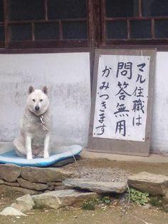 寺の境内におられた住職様w Happy Animals, Cute Baby Animals, Animals And Pets, Funny Animals, Japanese Funny, Japanese Dogs, Cute Dog Photos, Dog Pictures, Funny Dogs