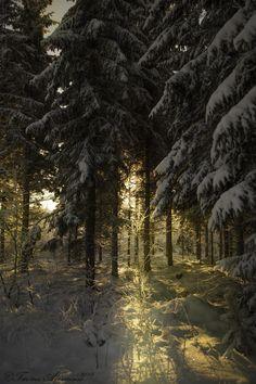 Photograph Warm by Tuomo Arovainio on 500px