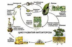 Грибковые инфекции быстро накапливаются в почве при неправильном ее использовании. Обеззараживание почвы осенью позволяет эффективно бороться с грибками.