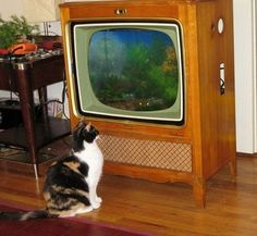 Old TV turned fish tank    http://www.mdolla.com/2011/01/fish-tank-made-out-of-old-tv.html