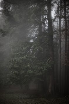 Out in the Woods by Kathrin Loges und Jan Wunderlich , via Behance
