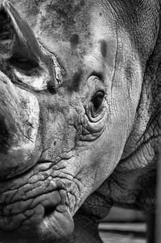 Rhino Up Close & Personal #rhinoceros #rhino #topanimals