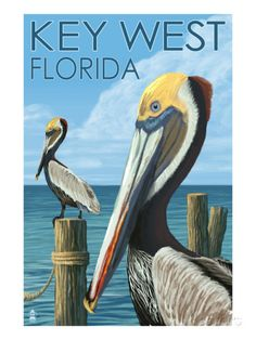 Key West, Florida - Brown Pelican Posters by Lantern Press at AllPosters.com