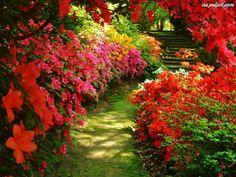 Kwiaty, Kamienne, Dróżka, Kolory, Park, Schody