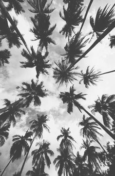 black and white palm trees - Google Search
