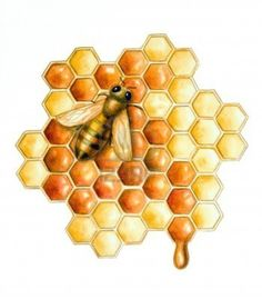Image detail for -bee filling the hive cells with fresh honey. Hand painted ...