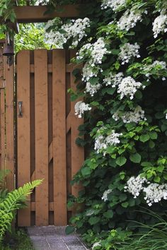 16 Fast-Growing Vines to Add to Your Yard This Season Fast Growing Flowering Vine: Climbing Hydrangea (Hydrangea petiolaris) Climbing Plants Fast Growing, Climbing Flowering Vines, Fast Growing Climbers, Fast Growing Flowers, Fast Growing Vines, Climbing Hydrangea, Climbing Vines, Wall Climbing Plants, Hanging Plants