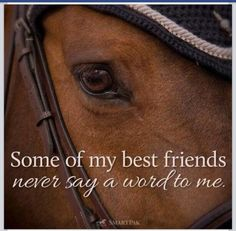 my vinny, dave, kay-kate, buck, magic, pretty, jack, and grizzy - dogs and horses are the best friends, cats too .. sometimes