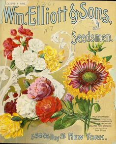 Wm.Elliott Sons Seed catalogue (1897) with illustrations of Phlox Drummondii, Carnation Marguerite, Gaillardia Picta Lorenziana.