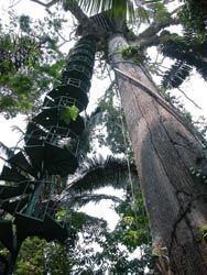 Tree house - Wikipedia, the free encyclopedia A spiral stairway leading to a treehouse