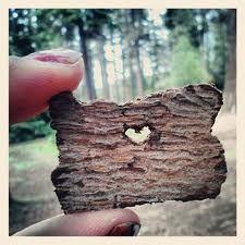 Love Oregon <3