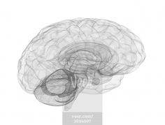 Brain wireframe model Stock Photo