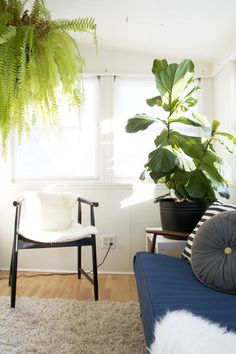 Loving the plants in this room!