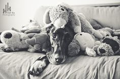 40 Amazing Pictures Of Great Dane