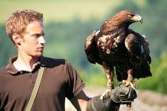 Greifvogelwarte: Die Könige der Lüfte Hautnah erleben! Die Greifvogelwarte Riegersburg hat sich seit 1988 das Ziel gesetzt, den Begriff artgerechte Tierhaltung großzuschreiben. Nicht hunderte, sondern maximal 30 Greifvögel finden hier ihren Platz. Unser Motto lautet weniger ist mehr und das zu Gunsten unserer Tiere. Alle, und wirklich alle Greifvögel erhalten bei uns täglich mehrmals die Gelegenheit zum absoluten Freiflug bis zu 5 Stunden täglich. Motto, Bald Eagle, Destinations, Animals, Setting Goals, Exploring, Animales, Animaux, Animal