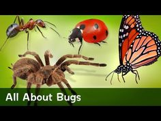 Bugs can be slimy, beautiful, tiny, squirmy, and graceful. In this story, Kai…