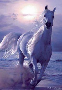 Horse art   Pferde gemalt: Andalusian