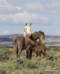 """Wild Horse Photography Wild Adobe Town Mare and Foals Print - """"Adobe Town Family"""" All The Pretty Horses, Beautiful Horses, Animals Beautiful, Wyoming, Farm Animals, Cute Animals, Wild Animals, Wild Mustangs, Mundo Animal"""