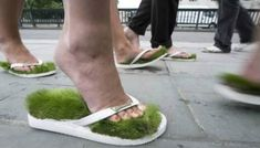 Take a walk in the grass wherever you are in these flip flops that have real grass growing in the soles! They are supposed to last up to four months with proper care.