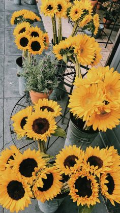New photography nature flowers flora 18 ideas My Flower, Yellow Flowers, Beautiful Flowers, Happy Flowers, Yellow Sunflower, Wild Flowers, Sunflower Wallpaper, Plants Are Friends, Happy Colors