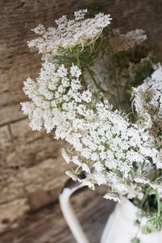 simple roadside flowers, queen annes lace