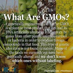 What are GMO's? Via yeson522.com