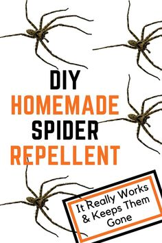 Natural Spider Repellant, Spider Spray, Spider Killer, Bug Spray Recipe, Get Rid Of Spiders, Diy Pest Control, Insecticide, Diy Cleaning Products, Cleaning Hacks