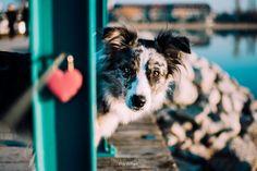 Hunde - Felli Photography - Vicky Fellinger Online Galerie, Dog Photography, Corgi, Animals, Graz, Photo Shoot, Corgis, Animales, Animaux