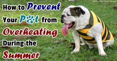 While some reports show that several hundred pets suffer heatstroke every year, a pet's death from this condition is entirely preventable. http://healthypets.mercola.com/sites/healthypets/archive/2014/06/16/pet-heatstroke.aspx